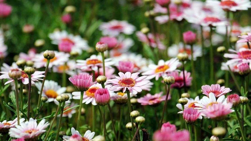 Różowe kwiaty na łące.