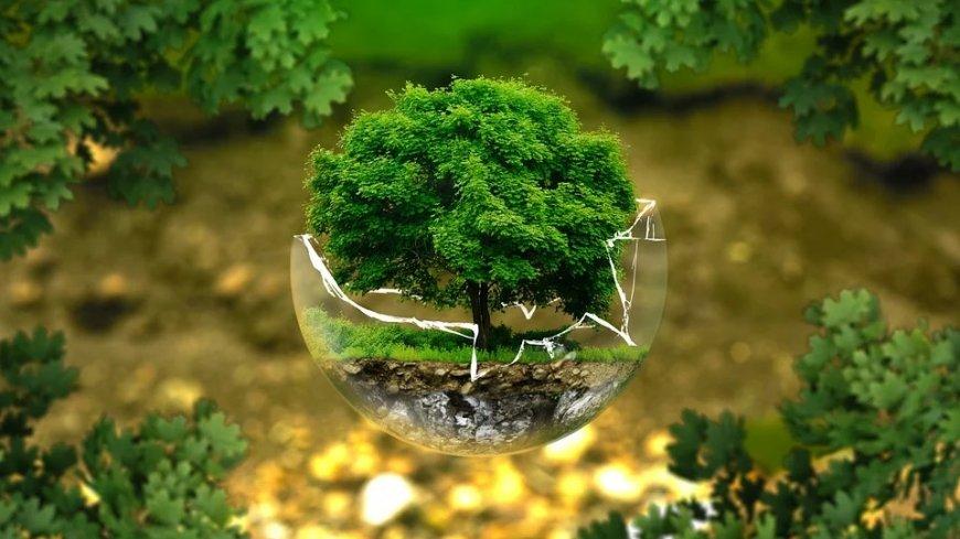Drzewo wyrastające ze szklanej kuli.